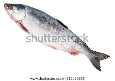 Fresh-frozen fish pink salmon