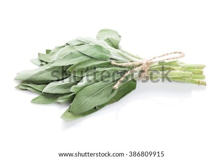 Fresh garden sage herb. Isolated on white background - stock photo