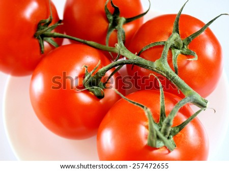 Fresh Garden Tomatoes Picked Off The Vine - stock photo