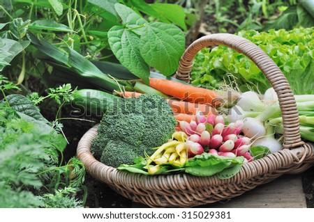 fresh garden vegetables in wicker basket - stock photo