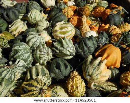 Fresh Gourd Produce - stock photo