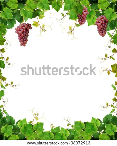 Fresh grapevine frame, isolated on white background - stock photo