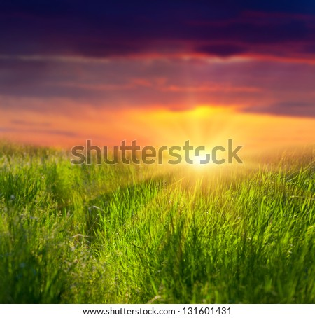Fresh grass and dramatic sky used as background