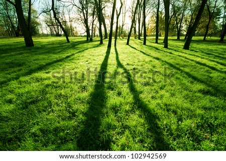 Fresh grass in a park - stock photo