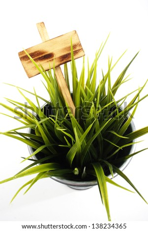 Fresh grass in a pot with yellow plate close up - stock photo