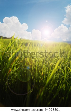 Fresh grass in the bright morning light - stock photo