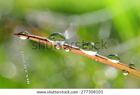 Fresh grass with dew drop closeup. Nature Background - stock photo