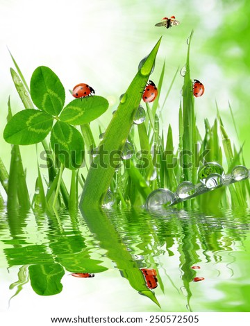 Fresh grass with dew drops and ladybugs close up - stock photo