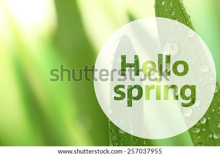 Fresh grass with dew drops close up. Hello Spring concept - stock photo