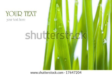 Fresh Grass with dew drops.Studio isolated - stock photo