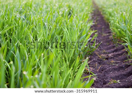Fresh Grass with drops of dew and ground way to the horizon, ecology background - stock photo
