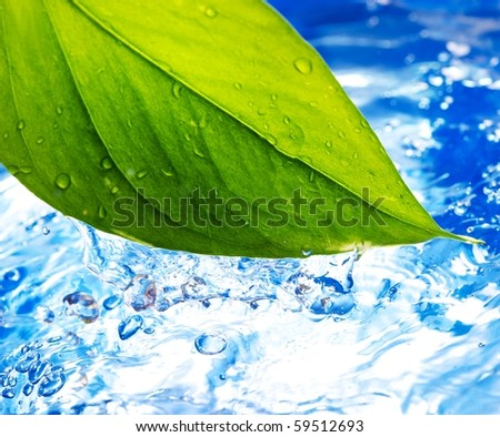 Fresh grean leaf and clear blue water - stock photo