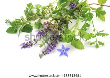 Fresh green and flower herbs - lavender, oregano, parsley - stock photo