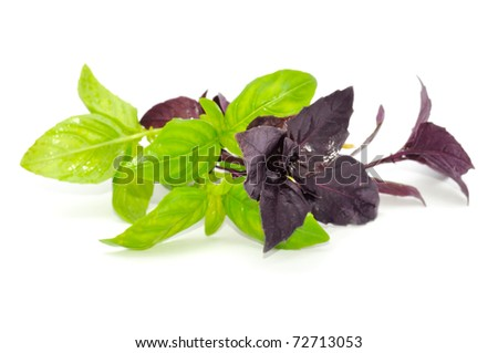 FRESH GREEN AND RED BASIL ISOLATED ON WHITE BACKGROUND - stock photo