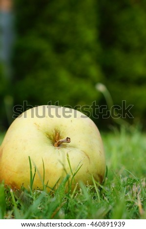 Fresh green apple lying on green grass