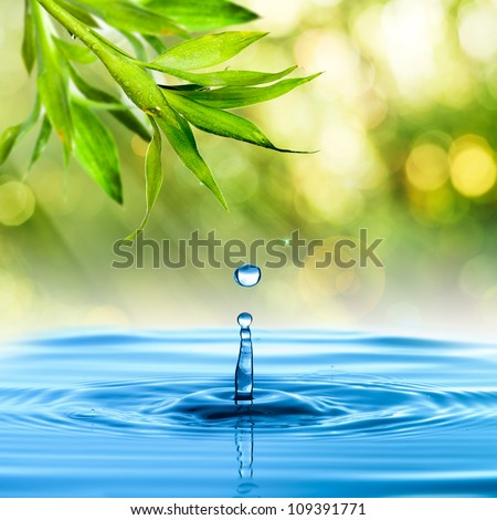 Fresh Green bamboo leaf with water drop on blue water and summer background - stock photo