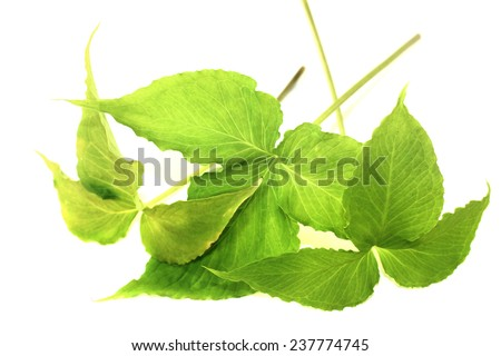 fresh green Ban Xia on a light background - stock photo