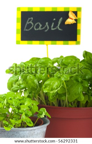 Fresh green basil and nameplate - stock photo