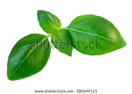 Fresh green basil (basilicum ocimum), organic, Genovese variety. Clipping path, infinite depth of field