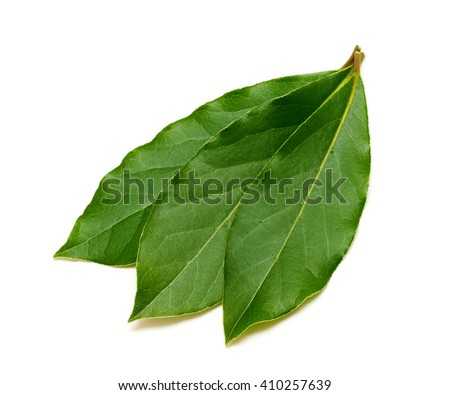Fresh green bay leafs isolated on white background - stock photo