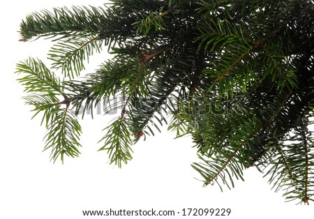 fresh green branches of christmas tree isolated on white background - stock photo