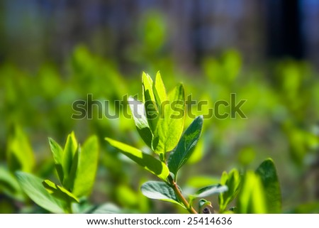 Fresh green bush leaves during the spring in the park - stock photo