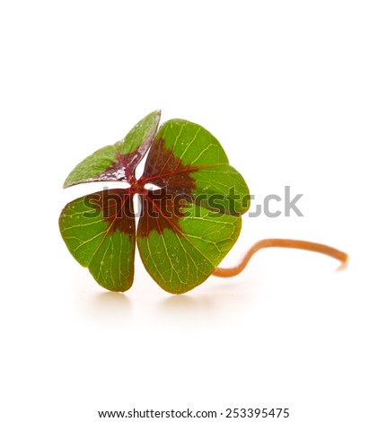 Fresh green cloverleaf  isolated on wooden background. - stock photo