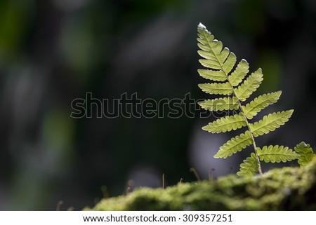 fresh green Fern leaf - stock photo