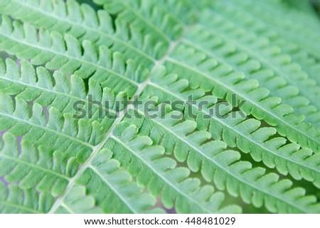 Fresh green fern leaf texture closeup. Natural foliage, botanic background, macro shot - stock photo