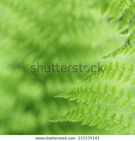Fresh green fern leaves in the forest - stock photo