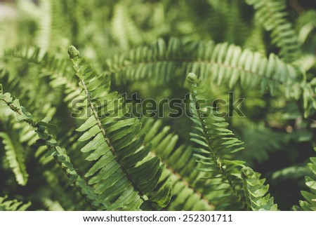 Fresh Green Fern Leaves. Nature Background - stock photo