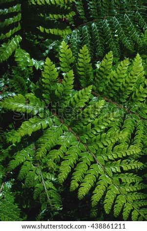 Fresh green fern plant