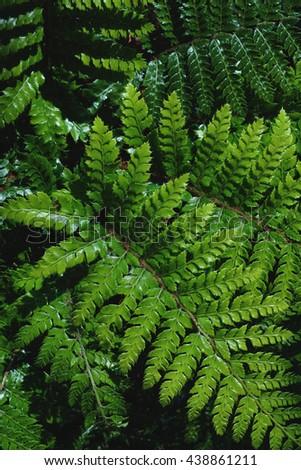 Fresh green fern plant - stock photo
