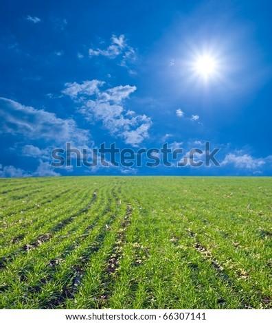 fresh green field under a sparkle sun - stock photo