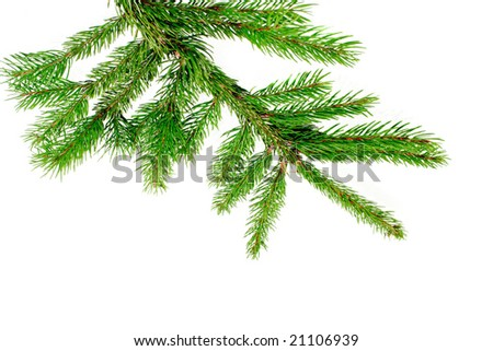 Fresh green fir branch isolated on white background - stock photo