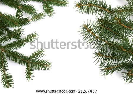 Fresh green fir branches - stock photo