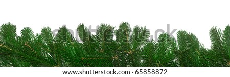 Fresh green fir branches background