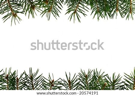 Fresh green fir branches isolated on white background - stock photo