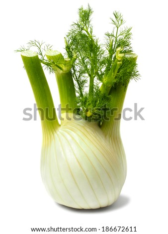 Fresh green Florence fennel bulb on white background - stock photo