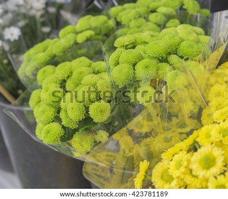 Fresh green flowers, bunches of green and yellow Chrysanthemums at Flower Market - stock photo