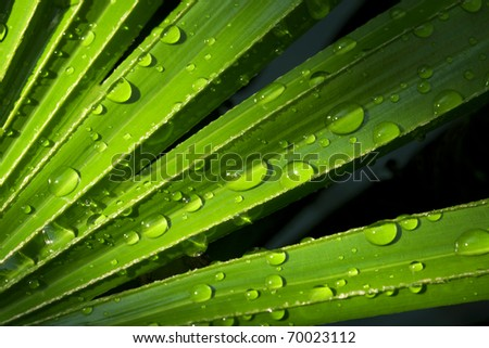 fresh green foliage with water drops after rain - stock photo