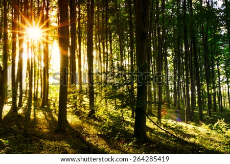 Fresh green forest in summer. Hungary - stock photo