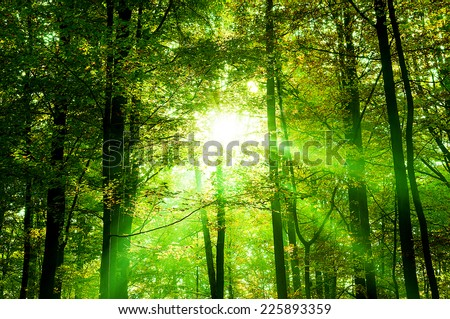 Fresh green forest with sunbeams  - stock photo