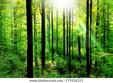 Fresh green forest with sunbeams in springtime - stock photo