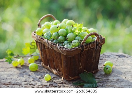 Fresh green gooseberries in a wooden basket outdoor