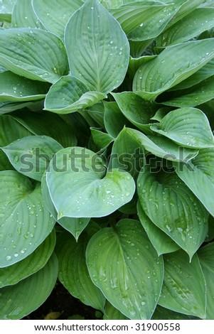 Fresh green grass - stock photo