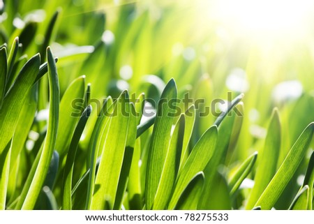 Fresh green grass - stock photo