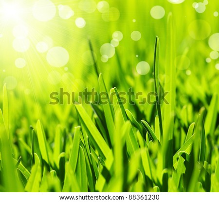 Fresh green grass abstract background, bright field with sunny bokeh, beautiful nature at spring - stock photo