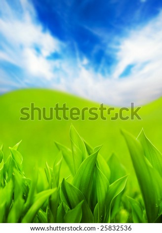 Fresh green grass and blue cloudy sky - stock photo