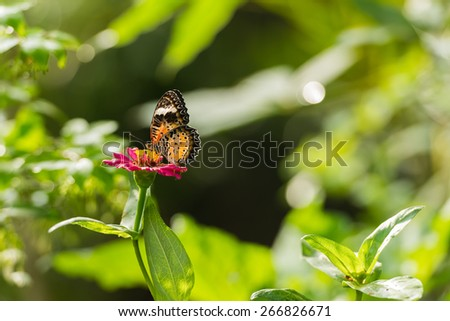Fresh green grass and butterfly. Natural background - stock photo